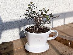 thumcoffee